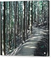 Forestry Acrylic Print