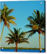 13- Palms In Paradise Acrylic Print