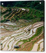 Longji Terraced Fields Scenery Acrylic Print