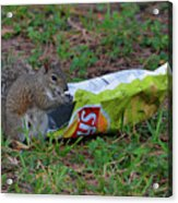 14- Chip Lovin' Squirrel Acrylic Print