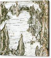 Detail Of Brich Bark Texture Acrylic Print