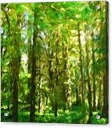 Nature Landscape Illumination Acrylic Print