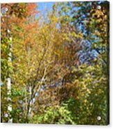 Autumn In Ma Acrylic Print