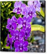 Orchids Kauai Acrylic Print