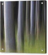 150403p264 Acrylic Print