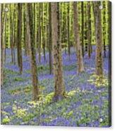 150403p366 Acrylic Print