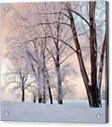 Amazing Landscape With Frozen Snow Covered Trees At Sunrise   Acrylic Print