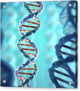 Dna Structure Acrylic Print