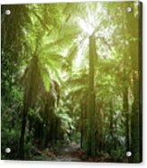 Forest Trail 2 Acrylic Print