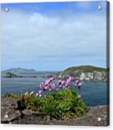 Blasket Islands Acrylic Print