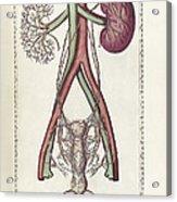 The Science Of Human Anatomy Acrylic Print