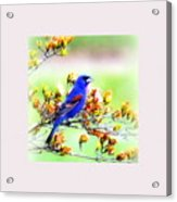 1795 - Blue Grosbeak Acrylic Print