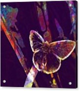 Insect Nature Live  Acrylic Print