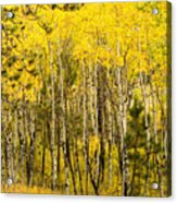 Rocky Mountain Autumn Acrylic Print