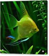 Fish Acrylic Print