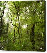 Jungle 1 Acrylic Print