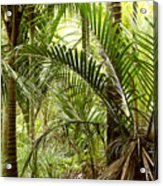 Jungle 94 Acrylic Print