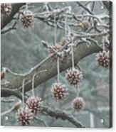 19th January Acrylic Print