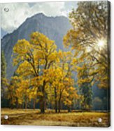 1m6611-oak Trees And Middle Cathedral Rock In Autumn Acrylic Print