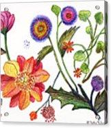 Botanical Flower-45 Odd Flowers Acrylic Print