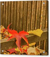 A Foliage Pillow On A Bench In A Woodland Acrylic Print
