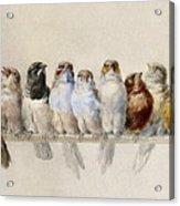 A Perch Of Birds Acrylic Print
