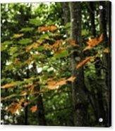 A Touch Of Autumn Acrylic Print