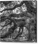 Angel Oak Tree Charleston Sc Acrylic Print by Dustin K Ryan