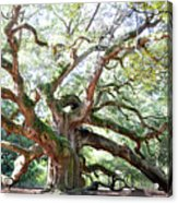 Angel Oak Tree Acrylic Print