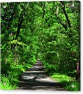 Appalachian Trail In Maryland Acrylic Print