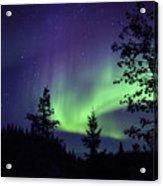 Aurora Borealis Above The Trees Acrylic Print
