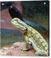 Australia - The Taipan Snake Acrylic Print