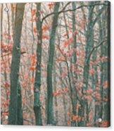 Autumn Forest Acrylic Print