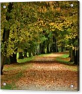 Autumn Park Acrylic Print