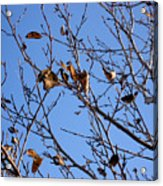 Autumn Wind Acrylic Print