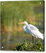 Beauty In Nature Acrylic Print