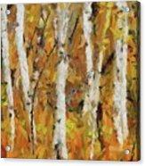 Birch Trees In Autumn Acrylic Print