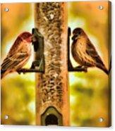 2 Bird's Eating  Acrylic Print