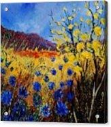 Blue Cornflowers Acrylic Print
