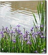 Blue Daffodils Acrylic Print