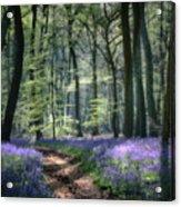 Bluebell Path Acrylic Print