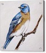 Bluebird Guardian Acrylic Print