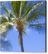Blurry Palms Acrylic Print