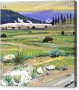 Buffaloes In Yellowstone Acrylic Print