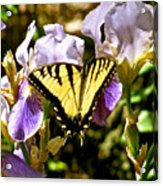 Butterfly Collection Design Acrylic Print