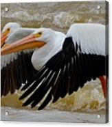 2 By 2 Acrylic Print by Janet Moss
