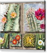 Cactus Collage Acrylic Print