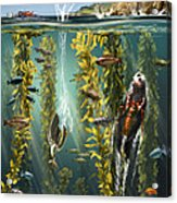 California Kelp Forest Acrylic Print