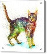 Cat fantasy Acrylic Print