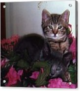 2 Cats In The Flowers Acrylic Print